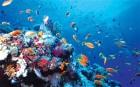 Oceans_2155183b