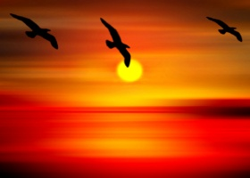 thumb-surat-birds-are-flying-at-sunset-point-sun-art-0