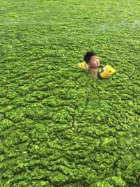 china_algae_14a