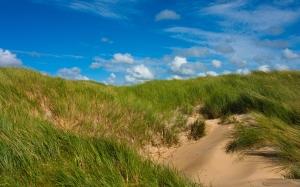 7038433-grass-sand-dunes