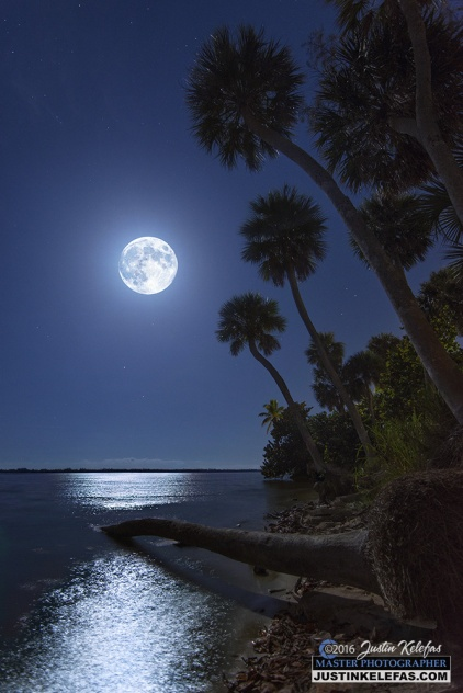full-moon-over-fallen-palm-at-indian-river-park-in-stuart-florida-web-1